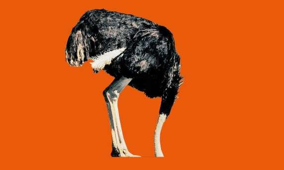 ostrich denial