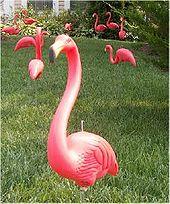 170px-Flamingo_1