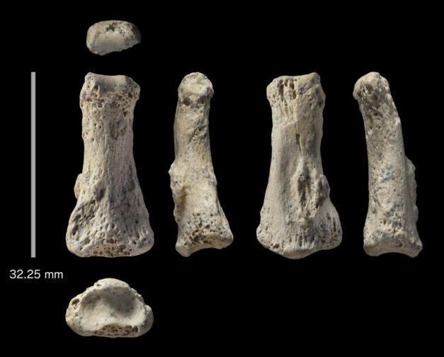 fingerbone